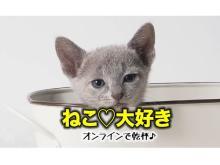 """""""ねこ""""好きさん集合!自宅で愛猫と一緒に参加できるオンライン飲み会開催"""