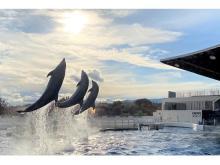 GWの2日間限定!京都水族館がイルカパフォーマンスのライブ中継を初開催