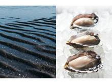 """自宅で""""殻付き生牡蠣""""を堪能!干潟養殖で育つ「ひがた美人」Web販売スタート"""