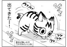 """飼い主さん「不便を全力サポートする覚悟だった」、前足が一本ない保護猫が""""うちの子になるまで""""描く漫画に反響"""