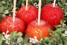 ほうじ茶をまとった新作限定フレーバーもお目見え♡代官山のりんご飴専門店「Candy apple」が横浜に初出店♩