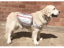 """もしもの時に備えよう!愛犬が自分で持ち運べる犬用""""避難用バッグ""""が登場"""