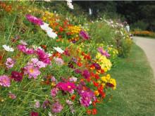 花々で彩られた「秋の里山ガーデンフェスタ」横浜市で開催!