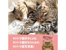 キジトラ猫ファン必見!SNSで大人気のキジトラ&キジシロの写真集が発売