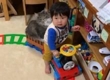 """愛猫乗せる""""小さな運転手""""に反響「速度、乗客、運転手…すべてが癒しなことってあるんだ」"""