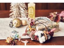 クリスマスリース作り&ランチを堪能!一日限定のスペシャルイベントが開催
