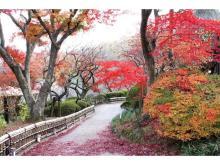 子どもも大人も楽しめる!京王百草園で恒例の「紅葉まつり」が今年も開催