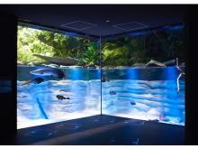 「カワスイ 川崎水族館」チケット&ホテルブッフェ付き宿泊プランが発売中