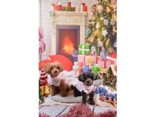 """テーマはクリスマス&お正月!愛犬と一緒に楽しめる""""うちの子撮影会""""開催"""