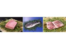 長崎県離島の水産物をお手頃価格で!関西圏にて「長崎県離島フェア」開催