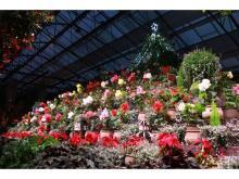 「富士花鳥園」名物ベゴニアピラミッドが電飾付き巨大クリスマスツリーに!