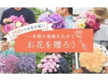 5日間限定!税・送料込250円でお花が届くお得なキャンペーンが開催中