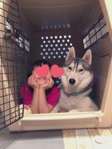 ケージの中で一緒に眠るハスキー犬と6歳の女の子にほっこり 「ふたりとも幸せそう」「ワンちゃんが彼氏のよう」