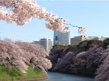 桜の中で記念の1枚!「KIMONO QUEEN」が限定10組の着物フォトプラン実施