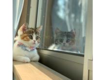 オンラインでも楽しめる!大丸東京店「第2回 だいにゃる猫の写真展」開催中