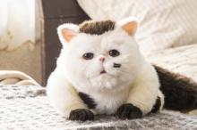 """テレ東の""""英断""""に称賛多数 メインがぬいぐるみの『おじさまと猫』、前例にとらわれない挑戦"""