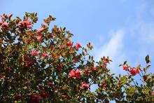 美しいカラー展開にうっとり。「イニスフリー」からツバキの花にインスピレーションを得たコレクションが登場