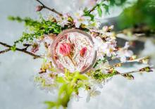 ふんわりかわいい春色に今年もキュンとしちゃいます。フィコ&ポムムにいよいよ「さくらスムージー」が登場