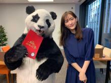 綾瀬はるか『ZIP!』パンダの星星と共演に歓喜 『奥様は、取り扱い注意』とコラボ