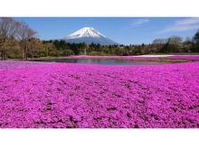 富士山×約52万株の芝桜の絶景!「2021富士芝桜まつり」4月17日より開催