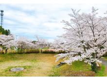 密を避けた空間で桜を堪能!オーパークおごせに「貸切お花見エリア」がOPEN