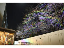 """静岡浜松市の「365BASE outdoor hostel」で""""さくらライトアップNIGHT""""開催"""