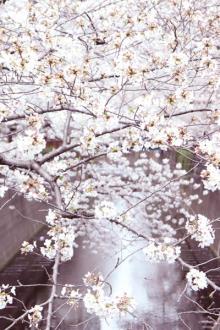 目黒川の桜並木と「PEANUTS Cafe」。春のペアリングでフォトジェニックの王道を楽しんで