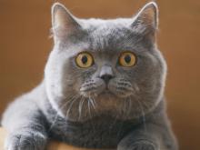 「まん丸で可愛い!」サランラップCMの猫が話題、動物プロダクションが明かすペットモデルの今