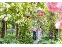 海を一望できる丘陵地にバラが咲き誇る「熱海ローズフェスティバル」開催