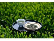 新茶の季節到来!入間市の狭山茶で心が和むひとときを
