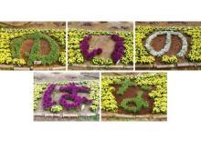 「東松戸ゆいの花公園」で季節の花を楽しもう