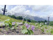 絶景の高山植物園が週末限定で早期オープン!珍しい植物を堪能できるツアーも開催