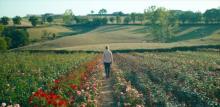 映画『ローズメイカー』季節によって表情が変わるバラ畑の本編映像公開