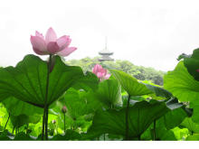 特別朝食や園内ツアー、遊び体験が楽しめる!名勝庭園「三溪園」で「早朝観蓮会」開催