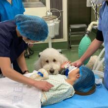 """手術に寄り添う""""病院勤務犬""""の意義 「癒すだけではない」犬が患者にもたらす力"""