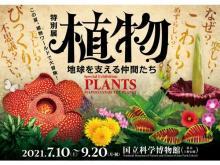 植物の実像や魅力に迫る!「植物 地球を支える仲間たち」が国立科学博物館で開催