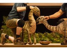 夏休みの家族の思い出作りに!リアル恐竜ショー「恐竜パーク」全国ツアー開幕