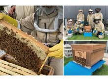 京都のホテルでは初めての取り組みとなる屋上でのミツバチプロジェクトが始動