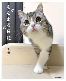 """猫の""""もち様""""フォトブック『もちまる日記』がBOOKランキング1位【オリコンランキング】"""