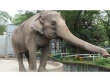 ゾウの宮子に新しいプールを!「宇都宮動物園」がクラウドファンディングを実施中