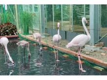 富士花鳥園の南の鳥ふれあいエリアが復活!記念グッズの販売も開始