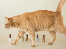 猫をテーマにした「the Madeleine club」コレクションが限定発売中!