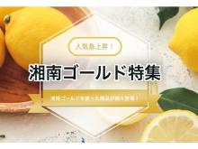 神奈川発の大人気ブランド柑橘「湘南ゴールド」の特集サイトがオープン!