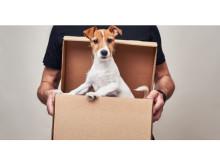 保護犬たちに美味しいごはんを届けたい!「ワンタップ寄付プロジェクト」がスタート