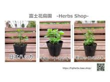 富士山の水で育てたハーブをお届け!「富士花鳥園」ハーブのウェブショップがオープン