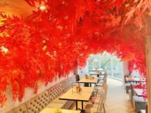 カフェ店内で紅葉狩り?! 真っ赤な紅葉景色が広がる店内でアフターヌーンティを味わおう