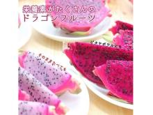 ビビッドなカラーが特徴!鹿児島県産のドラゴンフルーツが「JAタウン」で販売開始