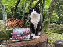 「水際のロッジ」がハチワレ看板猫『なめ』のカレンダー素材写真をSNSにて大募集中!