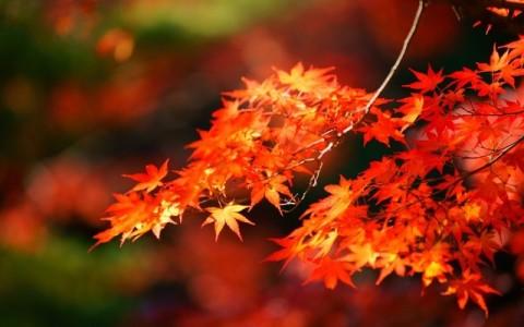 秋の風物詩「紅葉」はネイルにしておしゃれに