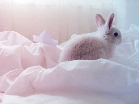 【動物モチーフネイル】かわいいデザインに癒されちゃおう♡